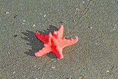 Red starfish lying on tropical sea Beach Royalty Free Stock Photos