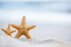 Red  starfish with ocean, beach, sky and seascape Royalty Free Stock Photos