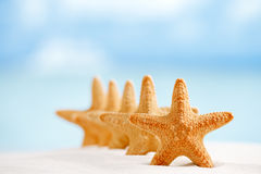 Red starfish with ocean, beach, sky and seascape Stock Images