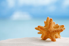 Red starfish with ocean, beach, sky and seascape Royalty Free Stock Photography