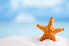 Red starfish with ocean, beach, sky and seascape Stock Photo