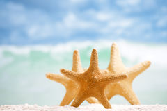 Red starfish with ocean, beach, sky and seascape. Shallow dof Royalty Free Stock Photos