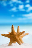 Red starfish with ocean, beach, sky and seascape Royalty Free Stock Images