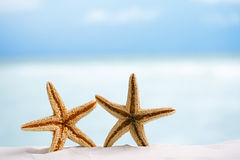 Red starfish with ocean, beach, sky and seascape Stock Photography