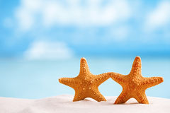 Red starfish with ocean, beach, sky and seascape. Shallow dof Royalty Free Stock Images