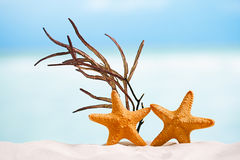 Red starfish with ocean,  white sand beach, sky and seascape Stock Images