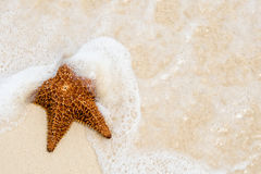 Red Starfish On A Sand Beach Stock Photos