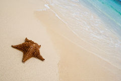 Red Starfish On A Sand Beach Royalty Free Stock Images