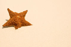 Red Starfish On A Sand Beach Royalty Free Stock Photos