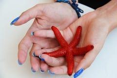Red starfish. One alive starfish - Echinaster Sepositus stock image