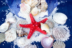Red starfish and other molluscs. The inhabitants of seas and oceans - molluscs Stock Photo