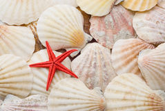 Red starfish over background of sea shells Royalty Free Stock Image