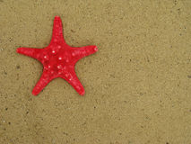Red starfish on sand Royalty Free Stock Photography