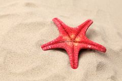 Red starfish on a sand background. Close up. Royalty Free Stock Photos