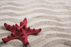 Red starfish on sand background Stock Images