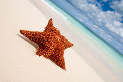 Red starfish on a sand beach Stock Images