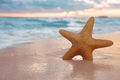 Red starfish on  sand beach, with ocean sky and seascape, Stock Photography