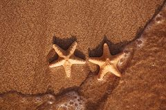 Red starfish on sand beach with wave and ocean Royalty Free Stock Photo