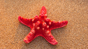 Red starfish on sand in natural sunlight Stock Photo