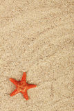 Red starfish on sand from sea Royalty Free Stock Images