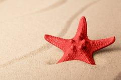 Red starfish on sandy beach royalty free stock photo