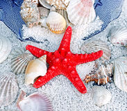 Red Starfish, Sea Slugs And Sea Shells Royalty Free Stock Photo