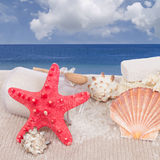 Red starfish with sea spa  setting Royalty Free Stock Photos