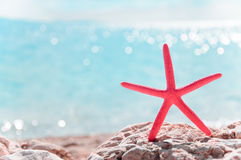 Red starfish and sea view summer background Royalty Free Stock Photography