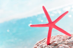Red starfish and sea view summer background Royalty Free Stock Image