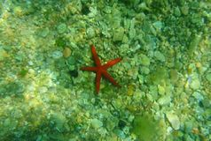 Red starfish on the seabed. Montenegro, the Adriatic Sea. Clear stock footage