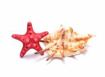 Red Starfish and seashell on white background Royalty Free Stock Images
