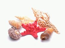 Red Starfish and seashells on white background Royalty Free Stock Photos