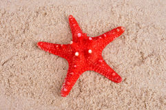 Red starfish on shallow sea sand closeup Stock Images