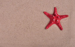 Red starfish on shallow sea sand closeup Stock Image