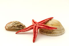 Red starfish and shells Royalty Free Stock Images