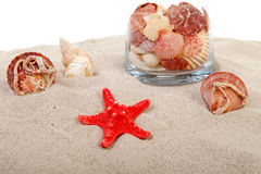 Red starfish and shells on sand Stock Images