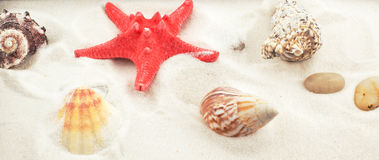 Red starfish and shells on white sand Royalty Free Stock Photos
