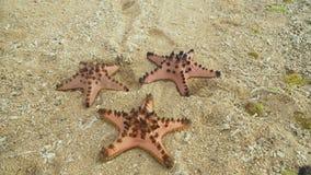 Starfish on the sand royalty free stock photo