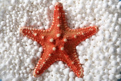 Red starfish Stock Photo