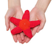 Red starfish toy. Hand made toy - red starfish in female hands. Isolation Stock Photography