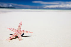 Red starfish on tropical beach Royalty Free Stock Photos