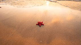 Red starfish on wet sand in natural sunlight Stock Photography