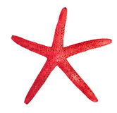 Red starfish on a white Stock Image
