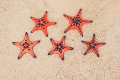 Red starfish on white sand on sunny tropical beach. five-star hotel by the sea concept.  royalty free stock photography