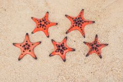 Red starfish on white sand on sunny tropical beach. five-star hotel by the sea concept royalty free stock photo