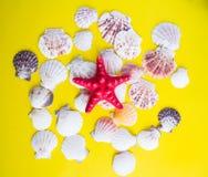 Red starfish and white seashells on yellow background stock photo