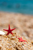 Red starfishes Royalty Free Stock Images