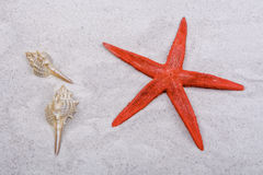 Red starfishes and one shell on a sand Stock Photography