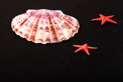 Red starfishes and seashell on the old black shabby background Stock Image