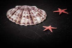 Red starfishes and seashell on the old black shabby background. Stock Photography
